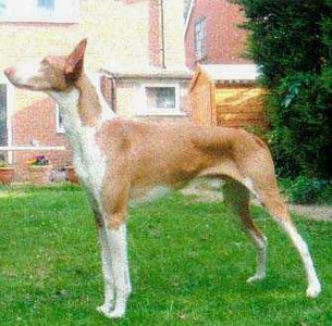 Akh Anubis Under Pressure   Pictured at 10years 4 months old