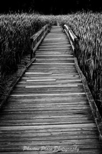 Boardwalk in Bog