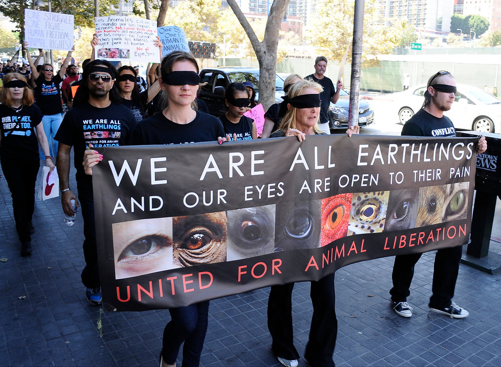 . Southern Californians join thousands of human earthlings in more than 14 countries marching this Saturday, August 24 from 12 noon to 3 pm in a global demonstration for total animal liberation. Participants will wear blindfolds to be simultaneously removed as marchers declare, �Our eyes are open to their pain.� Marchers worldwide call on human earthlings to support the right of all planetary citizens/earthlings to live without cruelty or violence regardless of their species and build global solidarity to reduce and ultimately end all forms of animal abuse now normalized in food production, medical and product research, entertainment, clothing and more. The Southern California march starts at Pershing Square at 5th and Hill in downtown Los Angeles; marchers will walk east on 5th to Broadway and then north to Grand Park at 1st and Spring Street at Los Angeles City Hall.  August 24, 2013. Photo by Gene Blevins/LA Daily News