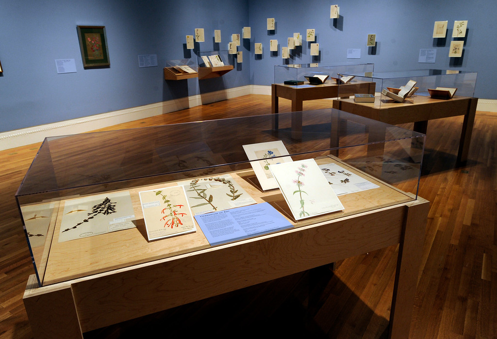 """. This is called the \""""Discovery\"""" room in the exhibit. \""""When they were wild,\"""" is the Huntington Library\'s new Wildflower exhibition which kicks off a month of talks, workshops and wildflower sales. San Marino, CA 3/8/2013(John McCoy/Staff Photographer)"""
