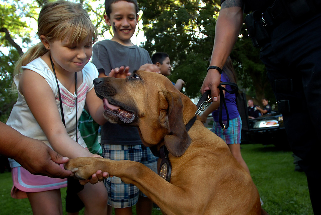 Description of . In this 2010 file photo, Sabrina Sidow, 9, of Pomona, left, pets Pomona Police Dog Willow during National Night Out at the Pomona Civic Center Plaza in Pomona. Pomona Police Department's senior bloodhound, Willow, died early Thursday morning while being treated for a sudden condition of gastric torsion, or bloat, according to police officials. (Staff File Photo)
