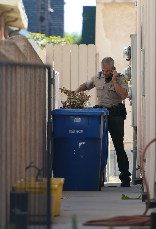 . A man in handcuffs eluded Sheriff\'s deputies before finally being caught hiding in a trash can in the alley behind the 700 block of 10th Street in San Pedro Wednesday, December 03, 2013.  A sifts through the trash can where the suspect was caught. Photo by Steve McCrank/DailyBreeze