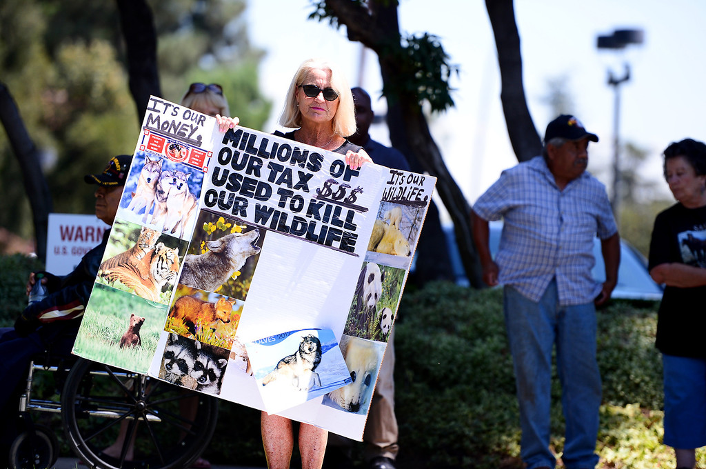 Description of . Animal advocate Patty Shenker, of Tarzana, protests outside the Ninth Circuit Court of Appeals in Pasadena with wildlife activists before attending a hearing on Bureau of Land Management's round-up of wild horses Thursday, August 29, 2013.