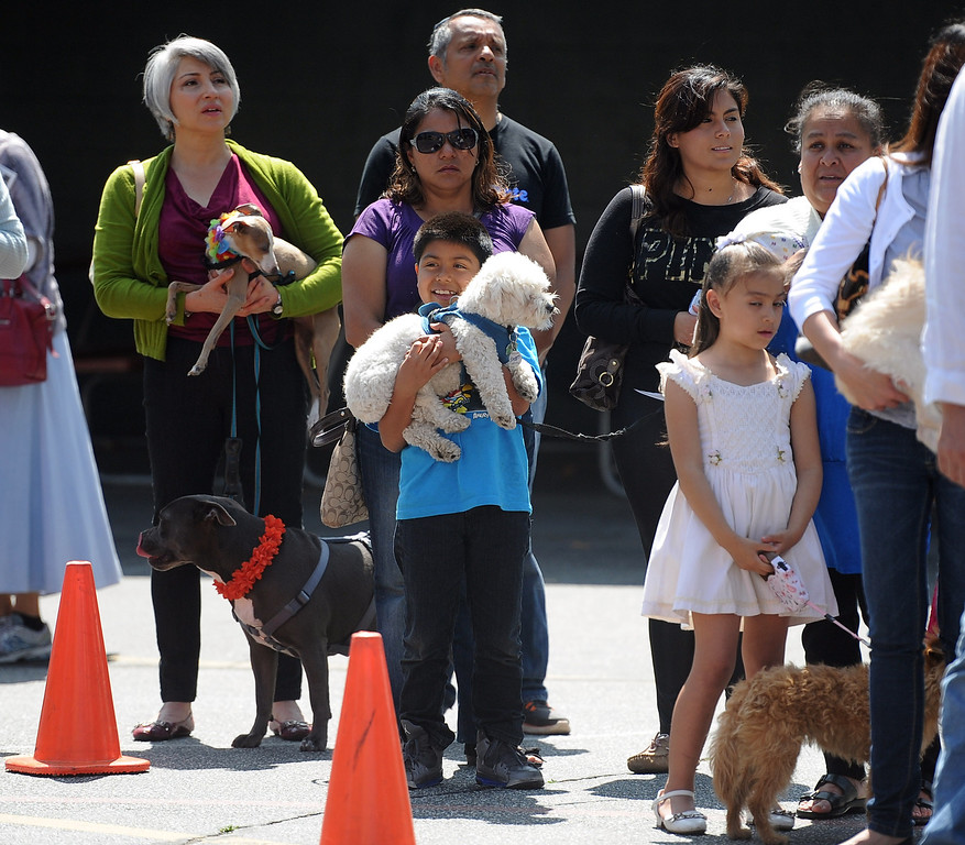 Description of . Dozens wait with their pets during the traditional Blessing of the Animals at St Andrew Church School on Saturday, March 30, 2013 in Pasadena, Calif.  (Keith Birmingham Pasadena Star-News)
