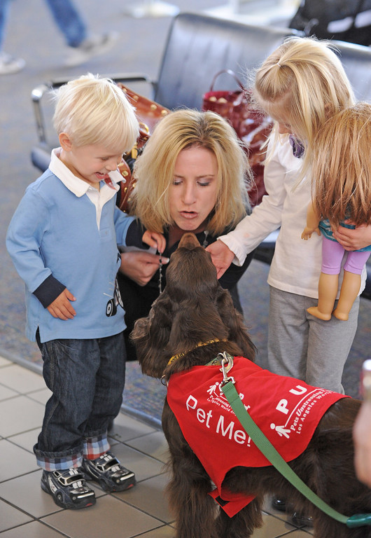 """. \""""CC\"""" greets the Traudt family from Hermosa Beach, (L to R: Bryson, mom Britta, and Brenna) New program at LAX called PUP (Pets Unstressing People) uses certified dogs to walk the terminals with their volunteer owners to greet passengers and help ease the tensions of modern airline traveling.   Photo by Brad Graverson 4-11-13"""