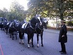 These gorgeous black horses look as though they could be pulling Cinderella's carriage!