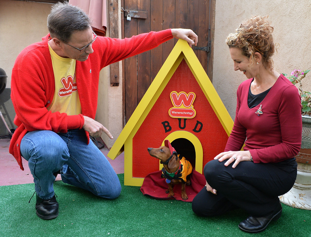 . Rescued Dachshund Bud Black, owned by David and Shawn Black will represent  the West in Weinerschnitzel  Weiner National Finals race Dec. 30th in San Diego. Bud won a Weinerschnitzel dog house in recent race.       Photo by: Robert Casillas / Daily Breeze