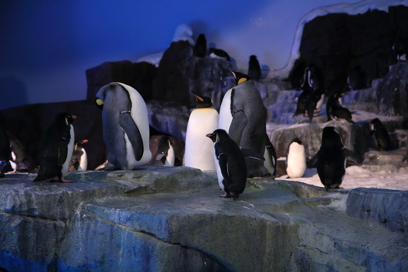Sea World's Antarctica: Empire of the Penguin Review in Orlando, Florida.