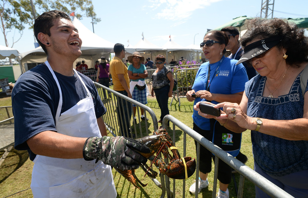 . The 17th Annual Original Lobster Festival at Rainbow Lagoon Sunday, September 08, 2013, in Long Beach.  Arthur Romero shows one of the live Maine lobsters to people before cooking them. Photo by Steve McCrank / Daily Breeze