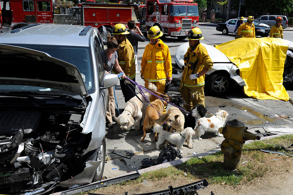 . A woman gets dogs from her car that was involved in a four car crash at Fulton Avenue and Magnolia Boulevard in Sherman Oaks, Wednesday, March 27, 2013. Witnesses said a town car was fleeing an accident at Riverside Drive an Fulton Avenue when it ran a red light at Fulton and Magnolia and broadsided a Lexus killing the driver of the Lexus. Two other vehicles were also struck at Fulton and Magnolia but the drivers and dogs were uninjured. (Michael Owen Baker/Staff Photographer)