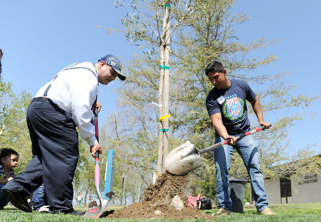 Description of . (John Valenzuela/Staff Photographer) Cal State San Bernardino students and military veterans Victor Quezada and Fred Cervantes help plant trees outside the Veterans Success Center on campus at CSUSB, Saturday, March 23, 2013. The non-profit organization Incredible Edible Community Garden of Upland, donated 50 trees for newly designed Veterans Living Memorial.