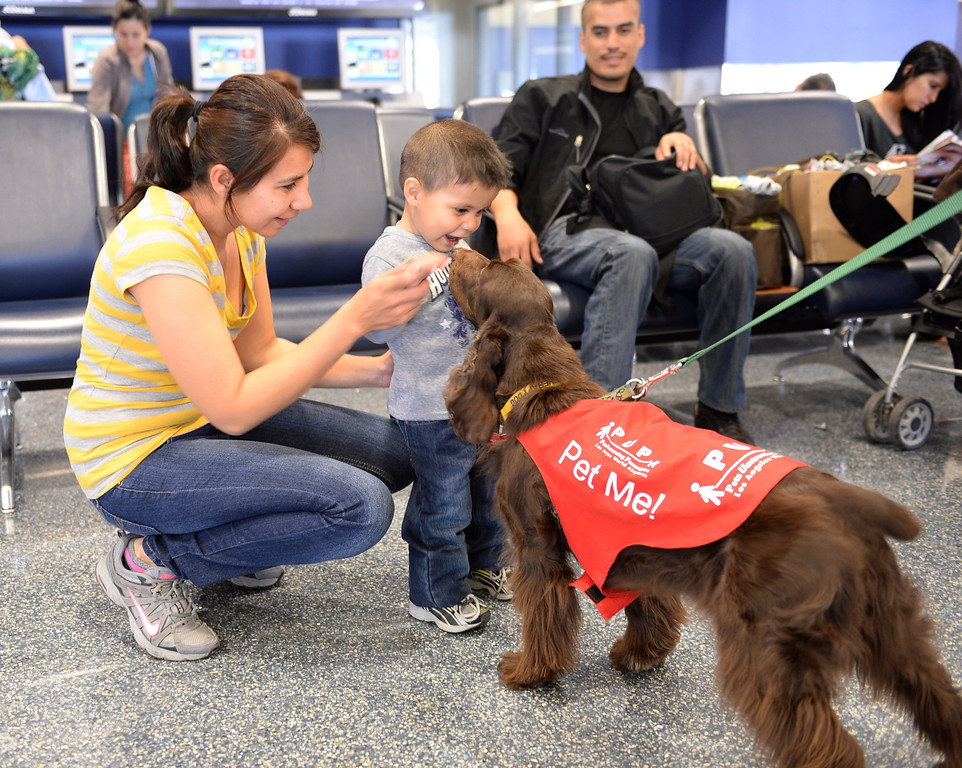 """. Gabriella Ortiz and son Osvaldo greet \""""CC\"""". New program at LAX called PUP (Pets Unstressing People) uses certified dogs to walk the terminals with their volunteer owners to greet passengers and help ease the tensions of modern airline traveling.   Photo by Brad Graverson 4-11-13"""