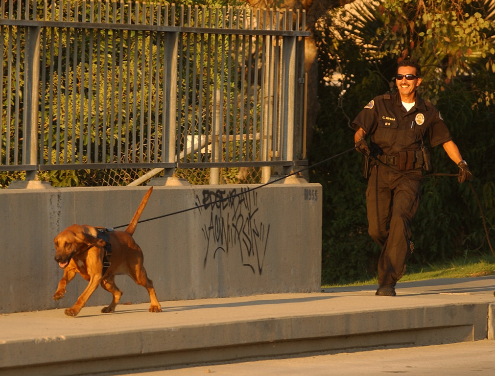 Description of . In this 2006 file photo, Pomona Police Department bloodhound, Willow, and Pomona Police K9 handler, officer Cesar Rivera, track a decoy scent during a training session in Pomona. Pomona Police Department's senior bloodhound, Willow, died early Thursday morning while being treated for a sudden condition of gastric torsion, or bloat, according to police officials. (Staff File Photo)