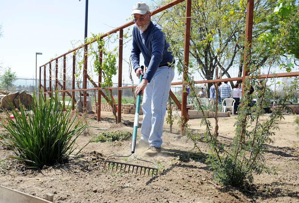 Description of . (John Valenzuela/Staff Photographer) Veteran Lloyd Williams work in the Disabled American Veterans Garden, Saturday, at Speicher Park in San Bernardino, March 23, 2013.