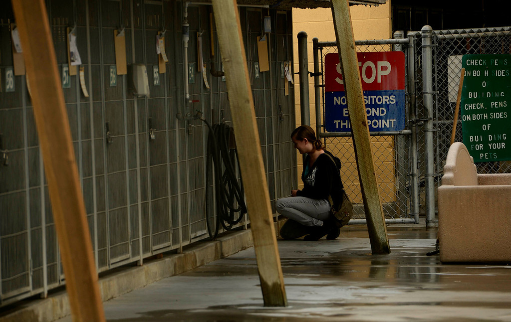. A scene from activity at the City Animal Shelter in San Bernardino February 19, 2013.   GABRIEL LUIS ACOSTA/STAFF PHOTOGRAPER.