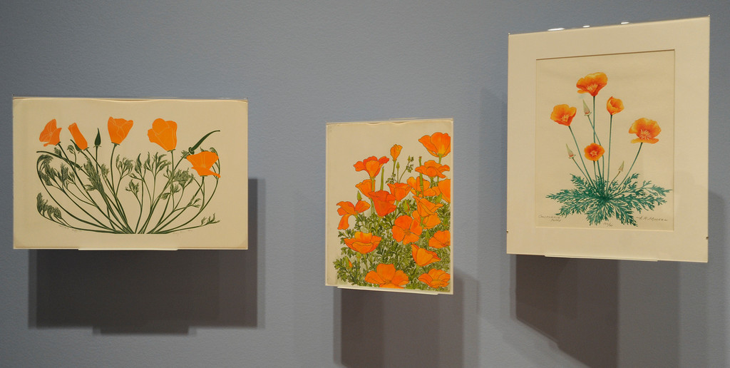 """. Calfornia poppies are represented by many different artists. \""""When they were wild,\"""" is the Huntington Library\'s new Wildflower exhibition which kicks off a month of talks, workshops and wildflower sales. San Marino, CA 3/8/2013(John McCoy/Staff Photographer)"""