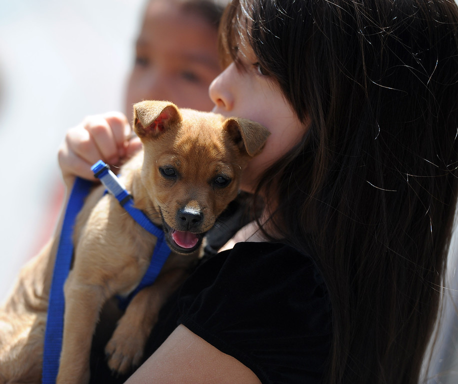 Description of . A dog and owner waits for Father Paul Sustayta to bless him during the traditional Blessing of the Animals at St Andrew Church School on Saturday, March 30, 2013 in Pasadena, Calif.  (Keith Birmingham Pasadena Star-News)