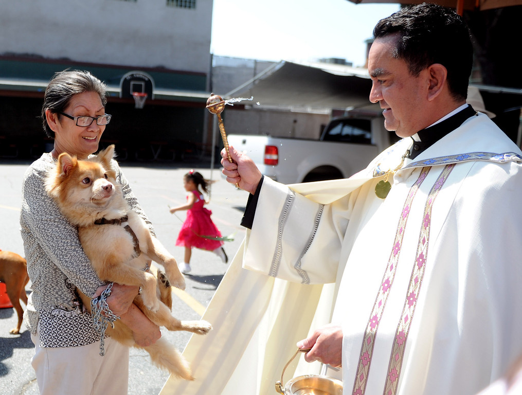 """. Sally Lee has her dog \""""Riley\"""" blessed by Father Paul Sustayta during the traditional Blessing of the Animals at St Andrew Church School on Saturday, March 30, 2013 in Pasadena, Calif.  (Keith Birmingham Pasadena Star-News)"""