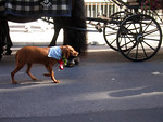 Even this dog was dressed for Oktoberfest :)