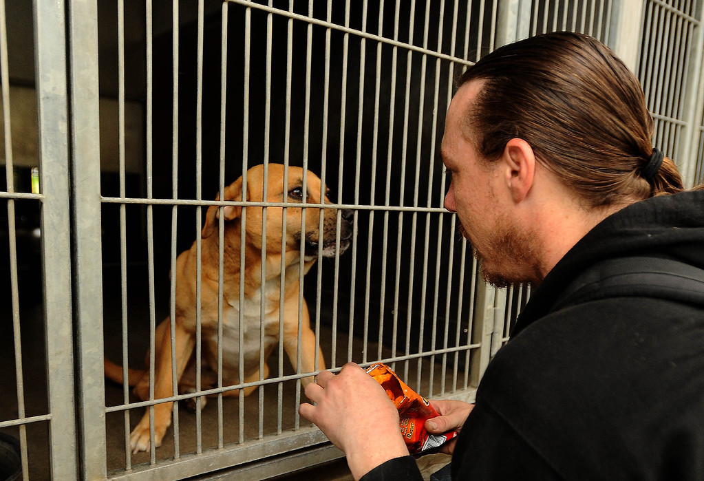 Description of . Homeless man Dave Thomas, 36, of San Bernardino, feeds chips to his dog Buzz Light Year after being reunited with the dog at the City Animal Shelter in San Bernardino February 19, 2013.  GABRIEL LUIS ACOSTA/STAFF PHOTOGRAPER.