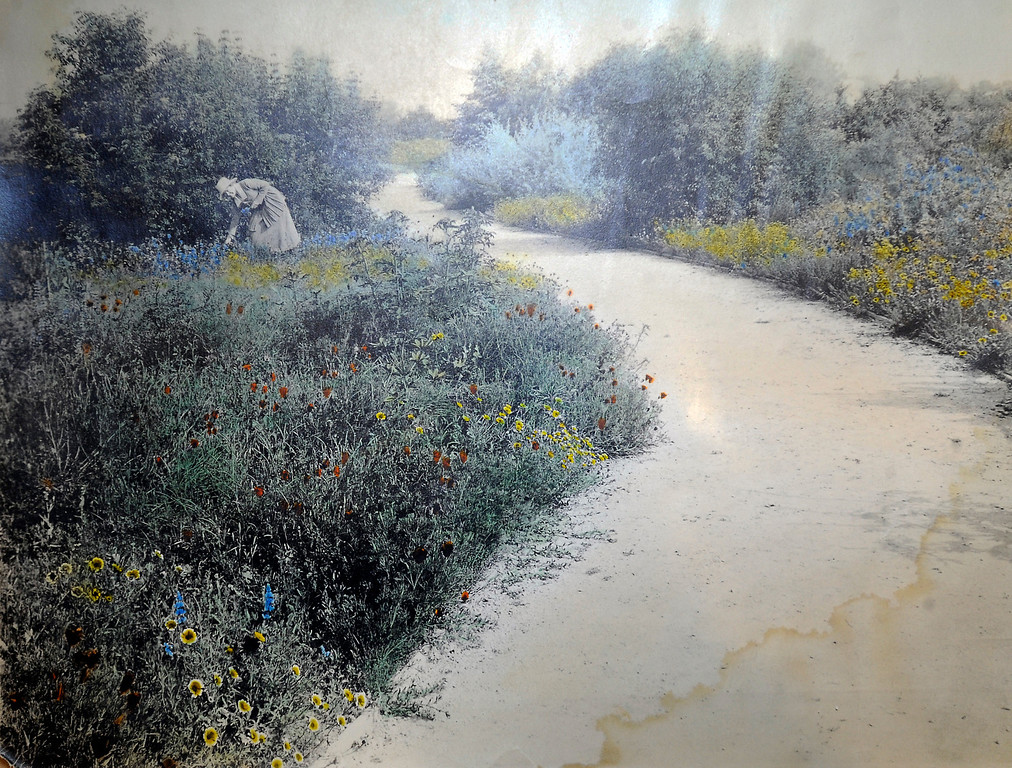 """. This hand painted 100 year old photograph shows a botanical garden that was found in the area where the Los Angeles Colesum is now standing. \""""When they were wild,\"""" is the Huntington Library\'s new Wildflower exhibition which kicks off a month of talks, workshops and wildflower sales. San Marino, CA 3/8/2013(John McCoy/Staff Photographer)"""