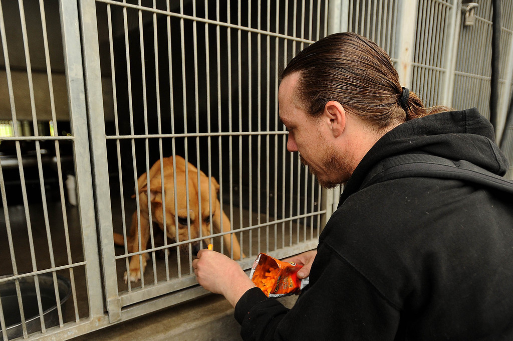 Description of . Dave Thomas, 36, of San Bernardino, right, visits his dog Buzz Light Year at the City Animal Shelter in San Bernardino February 19, 2013.  GABRIEL LUIS ACOSTA/STAFF PHOTOGRAPER.