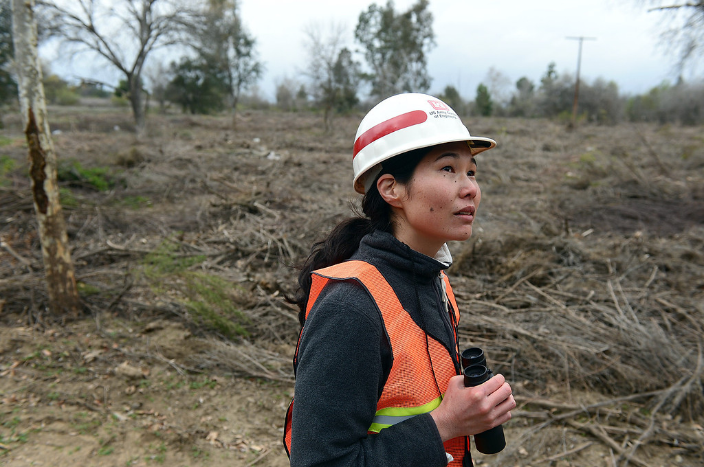. Biologist Tiffany Bostwich, of the U.S. Army Corps of Engineers, looks for birds in the controversial clearcut area of the Sepulveda Dam Basin in Encino Tuesday, February 19, 2013 as work continues. Nearly a 50-acre wildlife reserve area was cleared of non-native trees and brush in the flood control basin last December. (SGVN/Staff Photo by Sarah Reingewirtz)