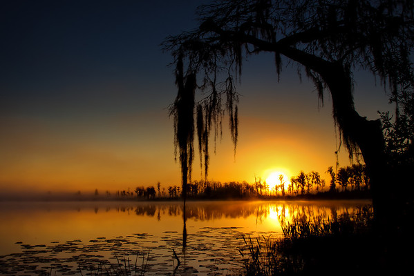 Sunrise On Spanish Moss