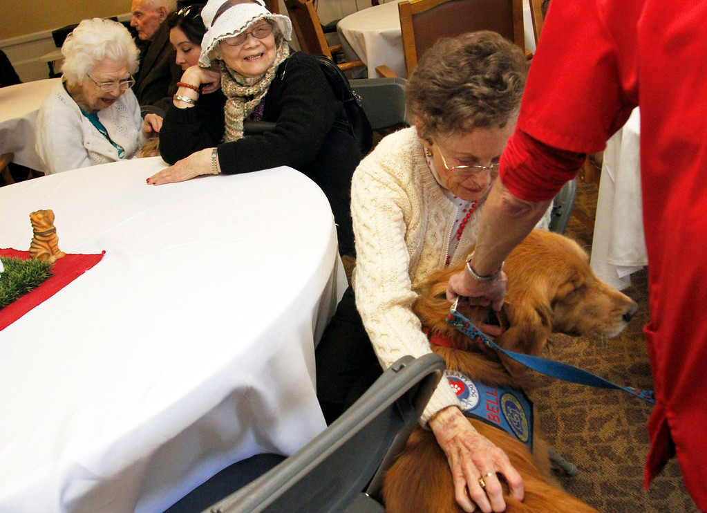 . Therapy dogs are introduced to senors, during the Pet Prescription\'s 10th Anniversary Open House, at Whitten Heights in La Habra, Saturday, March 9, 2013. The organization uses therapy dogs to heal emotional and medical problems and to hang out with seniors at retirement homes. (Correspondent Photo by James Carbone/SWCITY)