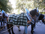 Even the horses blankets are pretty and festive.