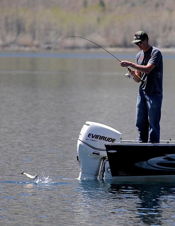 . A fisherman lands a fish at Convict Lake on opening day of Trout Fishing Season in the Eastern Sierra. Convict Lake, CA 4/27/2013(John McCoy/Staff Photographer)