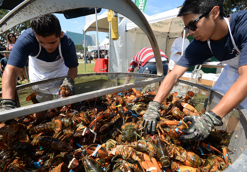 . The 17th Annual Original Lobster Festival at Rainbow Lagoon Sunday, September 08, 2013, in Long Beach.  Arthur Romero, left, and Michael Guttirez sort lobsters before cooking them. Photo by Steve McCrank / Daily Breeze