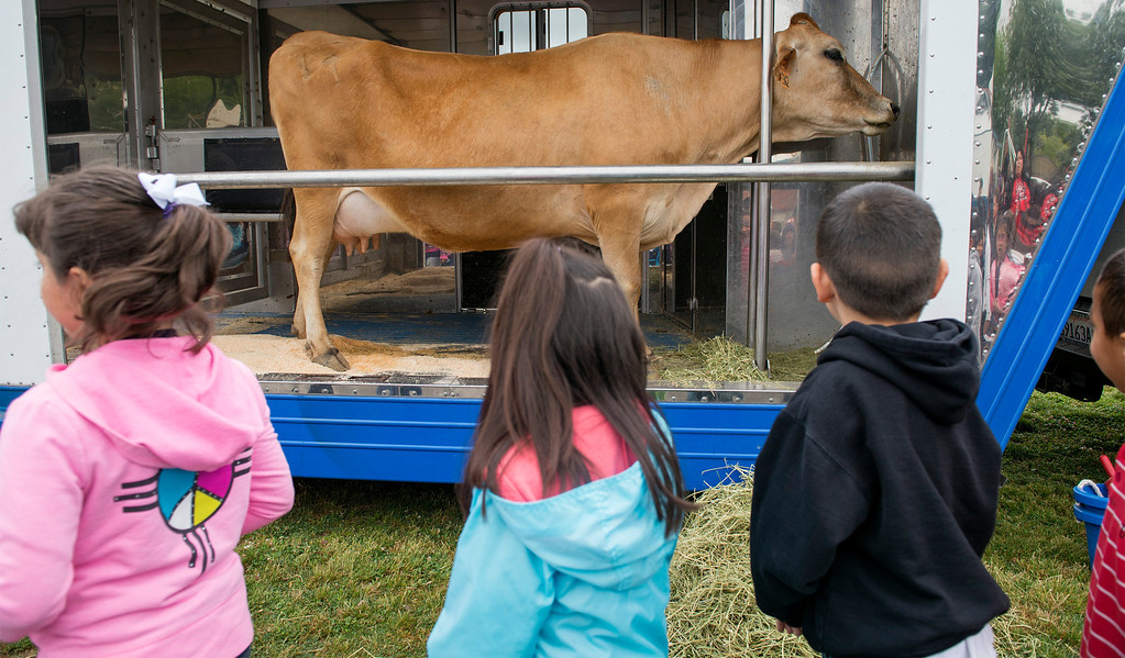 Description of . Foster Elementary students learn all about cows and milk from the Dairy Counsel of California's Mobile Dairy Classroom instructor Laura LaFayette at the Baldwin Park campus April 15, 2013.   (SGVN/Staff photo by Leo Jarzomb)