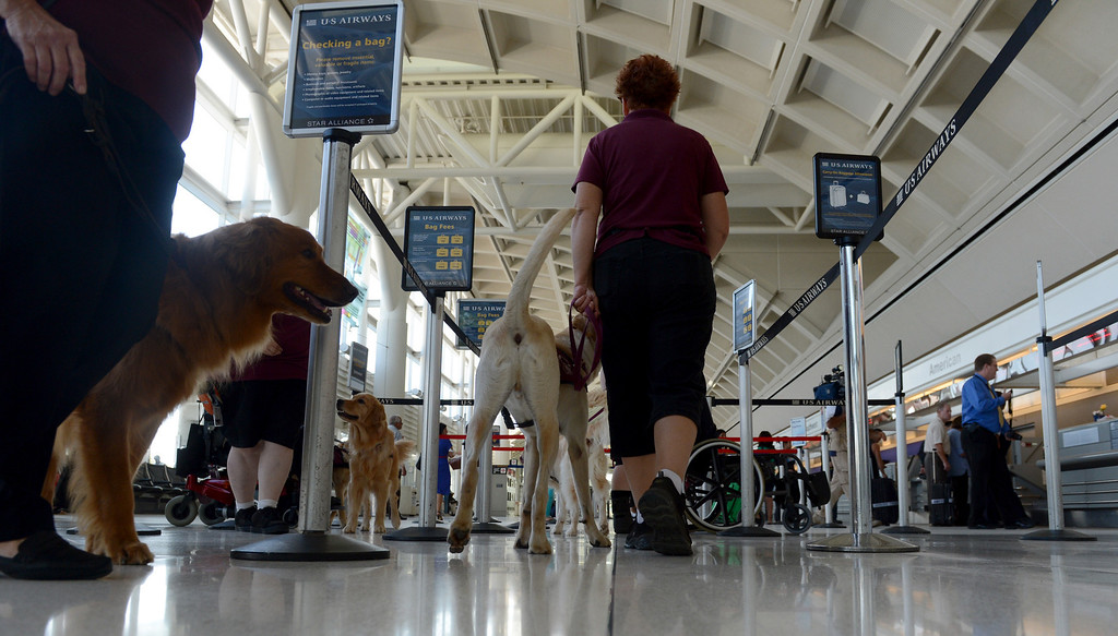 Description of . Service dogs get a feel for the airport as they work with their handlers and the TSA at LA/ONT International Airport in Ontario, CA Thursday, September 12, 2013. (Jennifer Cappuccio Maher/Inland Valley Daily Bulletin)