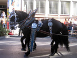 The horses were really graceful even though they were so large.