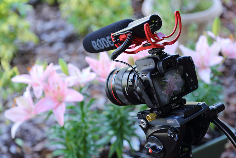Canon EOS Rebel SL1/100D with Rode VideoMic with Rycote Suspension System, a Hoodman Custom Finder Kit with H32 viewfinder loupe and a Manfrotto MVH500AH fluid video head.