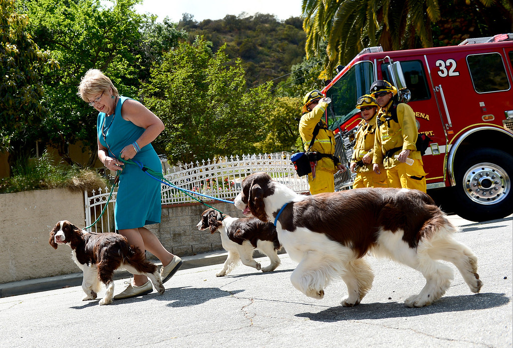 Description of . Julie Kay evacuates her dogs from her Monrovia home on Highland Place as firefighters battle a fast spreading brush fire believed to have been sparked by gardening work on Madison Avenue Saturday April 20, 2013. (SGVN/Staff Photo by Sarah Reingewirtz)