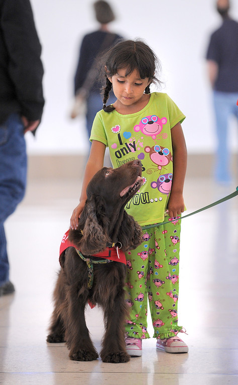 """. \""""CC\"""" with new pal Liliana Garibay, 5. New program at LAX called PUP (Pets Unstressing People) uses certified dogs to walk the terminals with their volunteer owners to greet passengers and help ease the tensions of modern airline traveling.   Photo by Brad Graverson 4-11-13"""