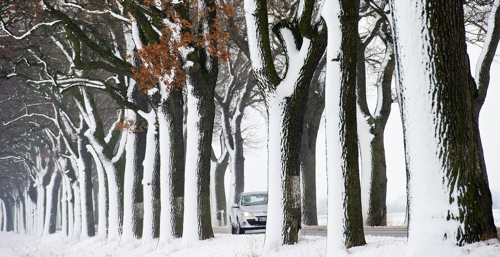 . A car passes snow covered oak trees near Petersdorf, eastern Germany, Tuesday, Feb. 19, 2013. (AP Photo/dpa, Patrick Pleul)