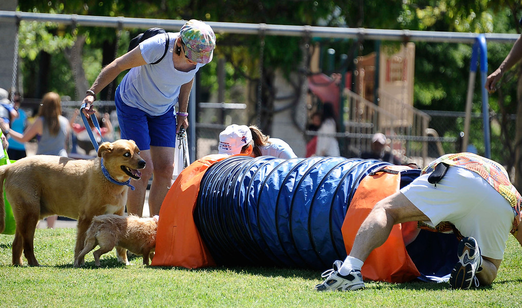 . April 21,2013. Calabasas. Dog owners try to get their dogs to enter doggie tunnel  during the Canine Classic Dog Walk & Festival at Juan Bautista de Anza Park.  Photo by Gene Blevins/LA Daily News