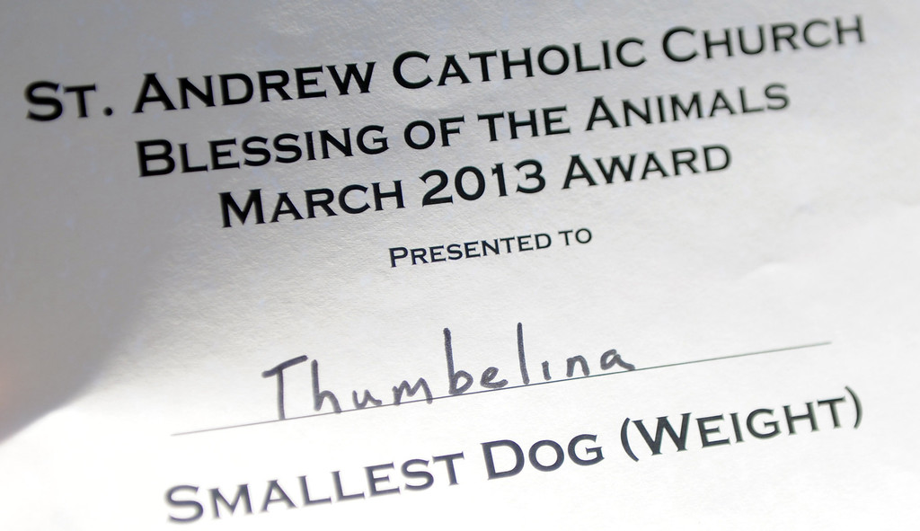 """. \""""Thumbelina\"""" won the award for smallest dog during the traditional Blessing of the Animals at St Andrew Church School on Saturday, March 30, 2013 in Pasadena, Calif.  (Keith Birmingham Pasadena Star-News)"""