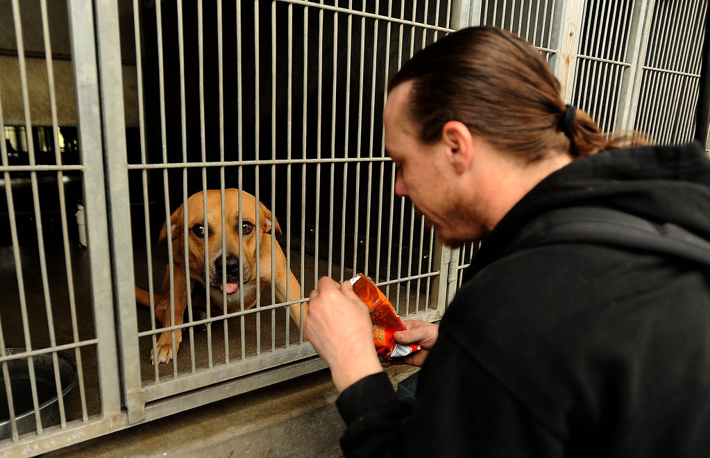 Description of . Homeless man Dave Thomas, 36, of San Bernardino, feeds chips to his dog  Fuzzy Bear after being reunited with the dog at the City Animal Shelter in San Bernardino February 19, 2013.  GABRIEL LUIS ACOSTA/STAFF PHOTOGRAPER.