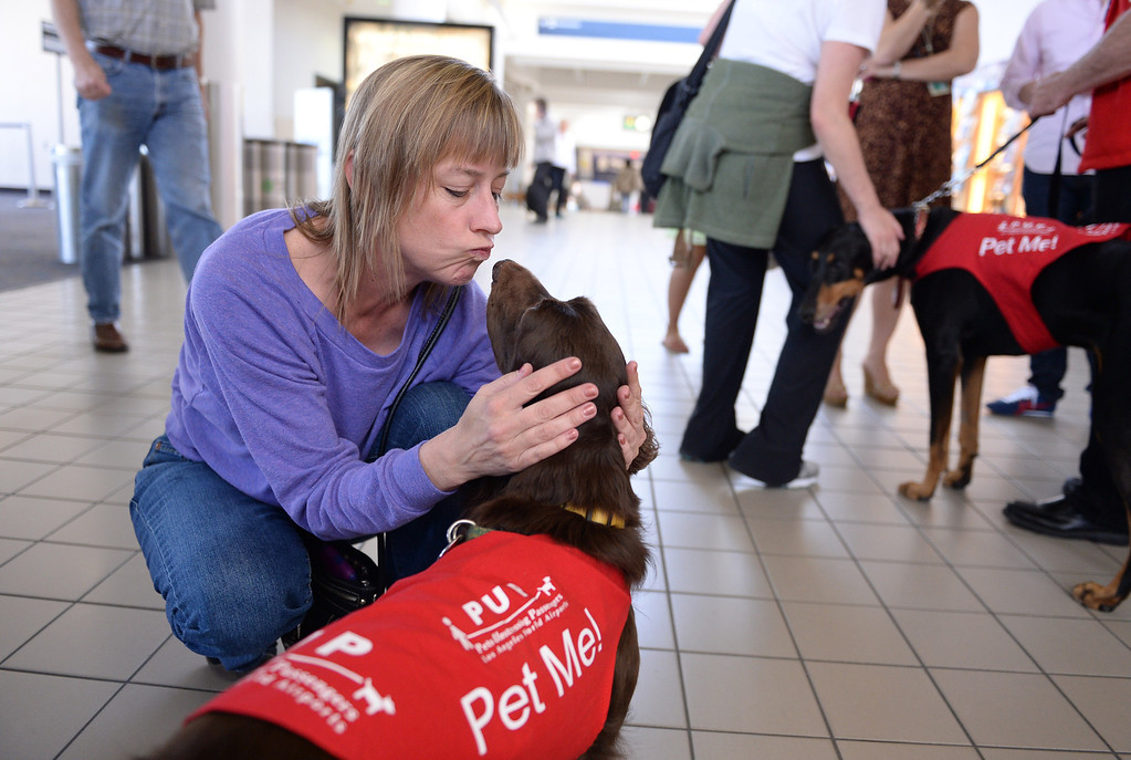 """. Laura Larsen of West Hollywood kisses \""""CC\"""" New program at LAX called PUP (Pets Unstressing People) uses certified dogs to walk the terminals with their volunteer owners to greet passengers and help ease the tensions of modern airline traveling.   Photo by Brad Graverson 4-11-13"""