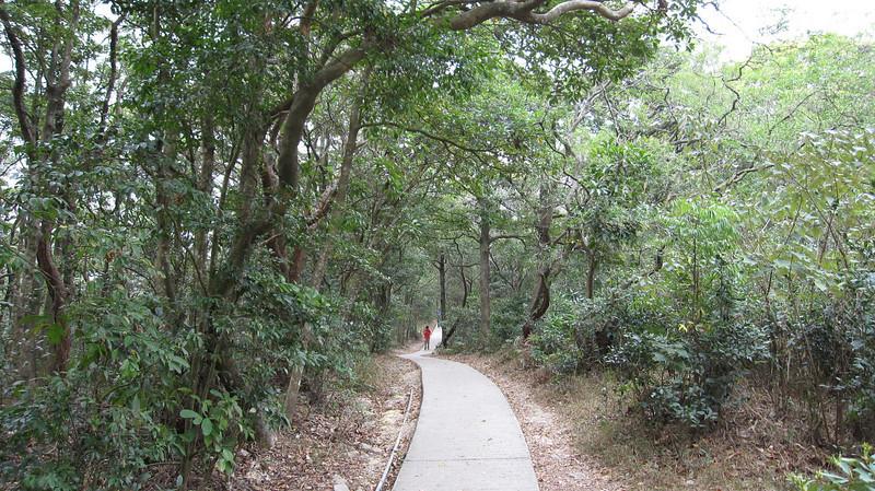 Walking to Wisdom Path
