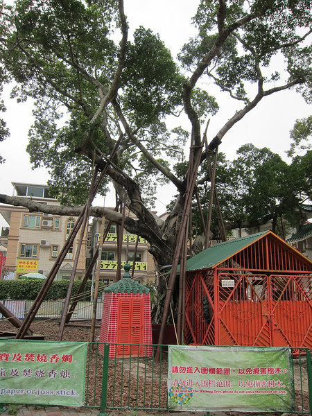 林村許願樹 Hong Kong Wishing Tree